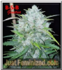 B-S-B Genetics Auto Bruce Banner Female 5 Seeds